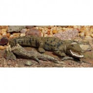 Large Saltwater Crocodile Figurine